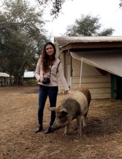 Rooterville pig