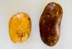 Potatoes 1 (1 of 1)
